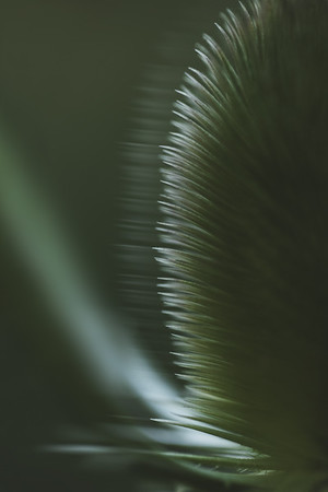 Motion in Green