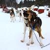 Norway - 狗拉雪橇