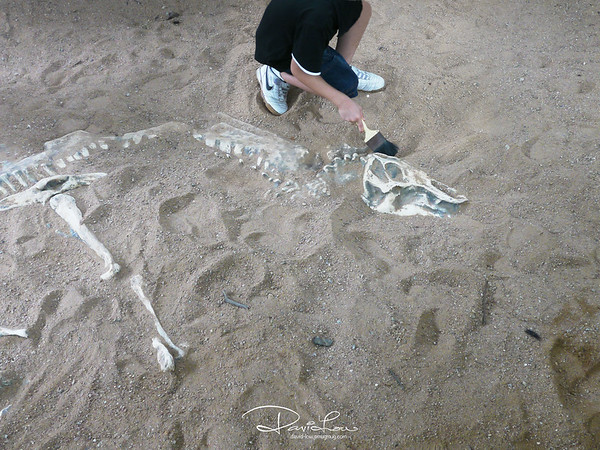 """60 million years ago when the """"Swoosh"""" was already designed by someone. Its actually a children's discovery place where various types of fossils and skeletons are embeded beneath the sand."""