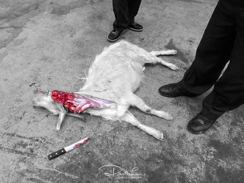 "Who killed Billy? - This is meant to be a ""provocative"" candid shot. Using the alleyway in China made better sense for slithering a goat than utilising their small kitchen top for whipping up a gourmet..The apparently curious onlookers were indeed the ""butchers""."