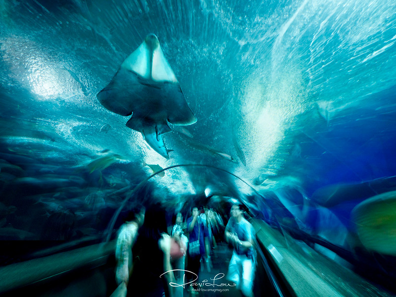Underwater World, Sentosa