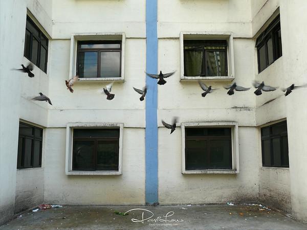 Birdie (1)