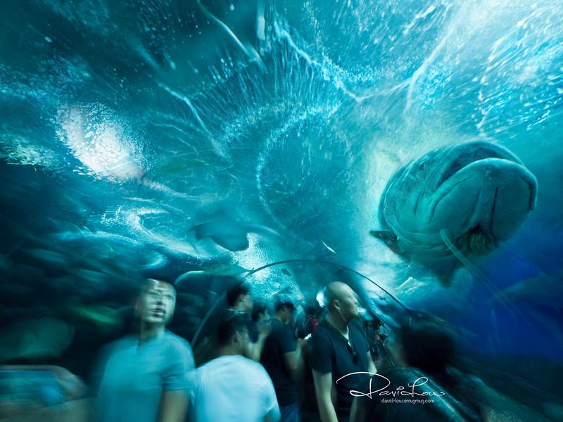 Underwater World, Sentosa (last day before it closed).