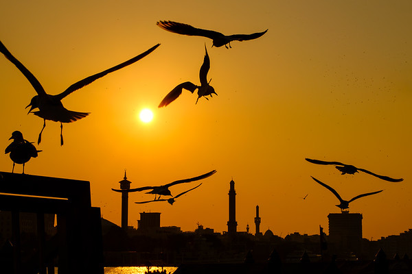 Birds of Dubai Creek
