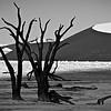 DEAD VLEI THORN TREES, LOOKING WEST