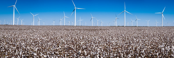 Cotton Field and Wind Turbines