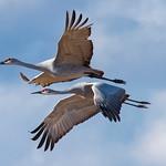 Pair Flight