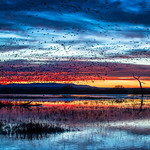 Marsh Twilight