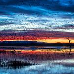 Marsh Twilight