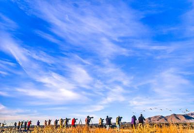 Photographers at Bosque del Apache Nat'l Wildlife Refuge, NM - 4 - 72 ppi