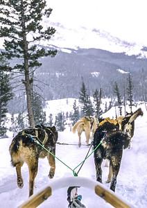 Dogsled team near Big Sky, Montana - 5 - 72 ppi