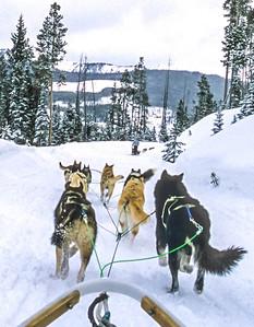 Dogsled team near Big Sky, Montana - 4 - 72 ppi-2