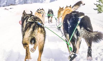 Dogsled team near Big Sky, Montana - 2 - 72 ppi