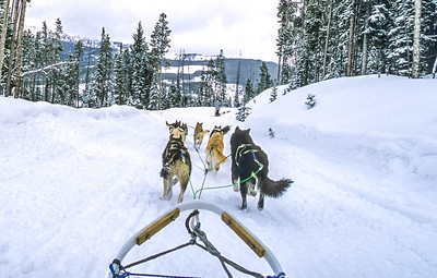 Dogsled team near Big Sky, Montana - 4 - 72 ppi
