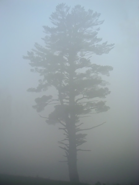 Foggy Tree Sanbornton, NH