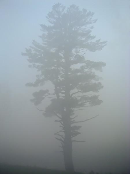 Foggy Tree Sanbornton, NH