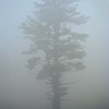 Foggy Tree<br /> Sanbornton, NH