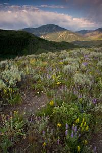 proctor ridge scenic