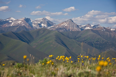 Flowers and Pioneer Peaks from the top of Driveway Gulch.