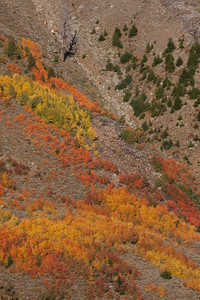 A beautiful range of fall color.