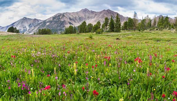 Antz Basin Wildflowers en route to Boorn Lake