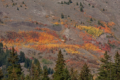 The flanks of Cobb Peak at the height of their fall color.