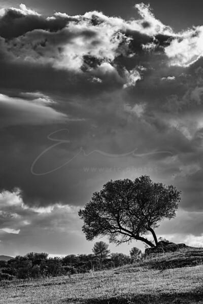 La Plaine des Maures