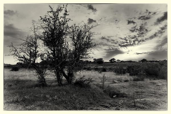 avant le crépuscule | before dusk