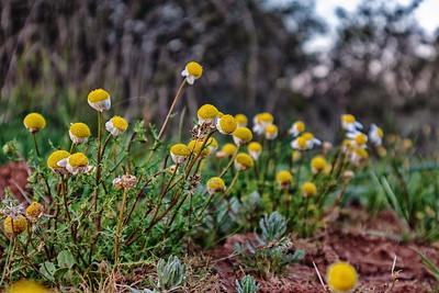 les fleurs sauvages | the wild flowers