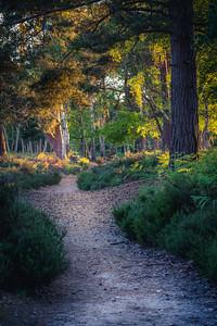The Dunwich Path