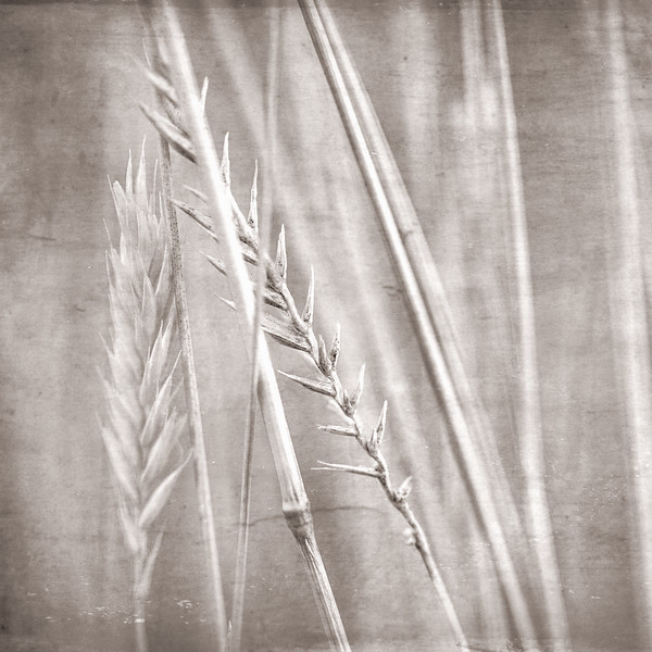 Summer Grass 6