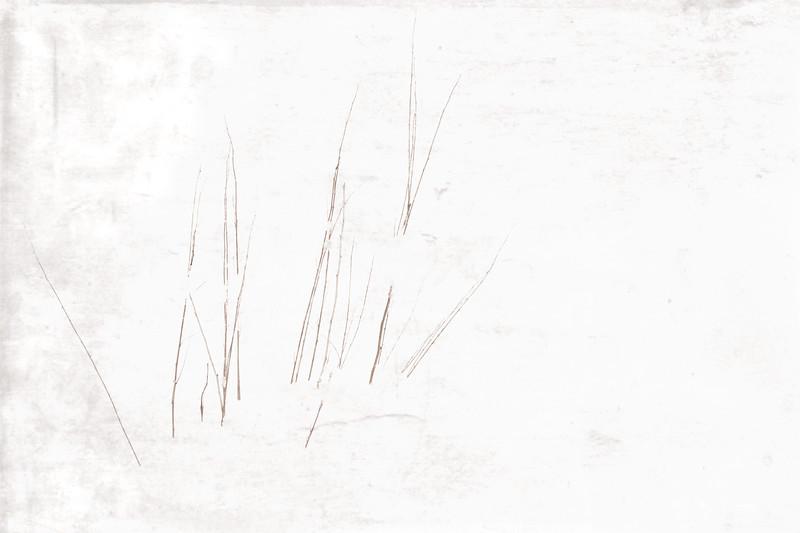 Summer Grass 7