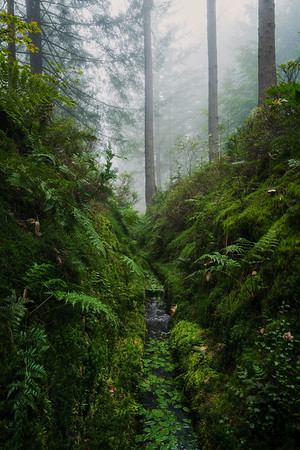 Green and foggy