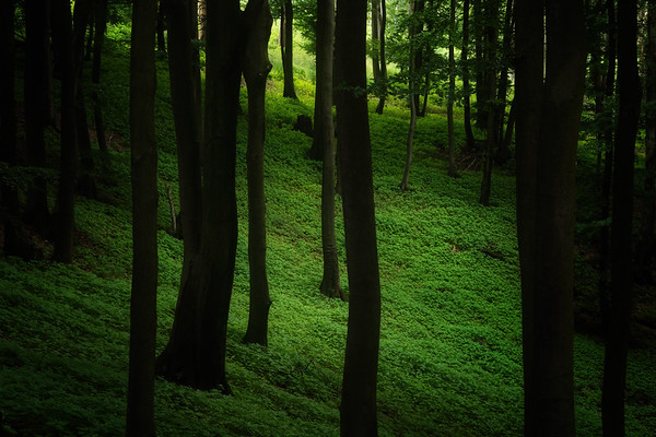 Dark and green