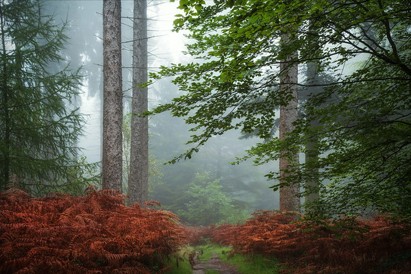 Into the ferns