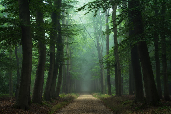 The road of mysteries