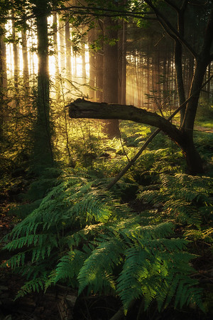 Forest intimacy