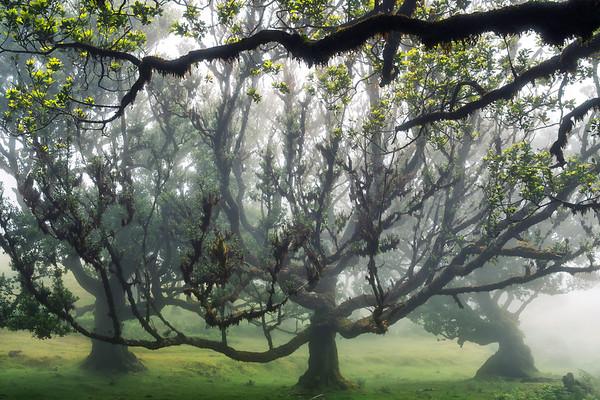 Under the branch...