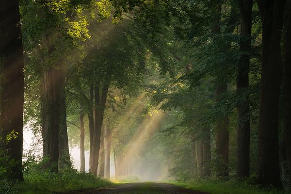 Beautiful Dutch countryside