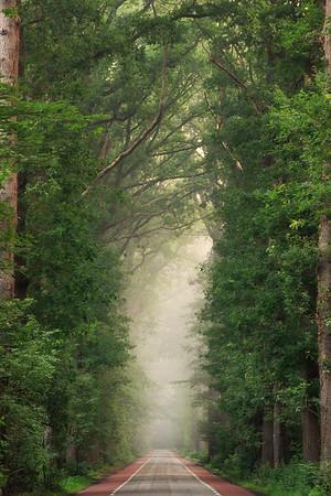 Misty summer road