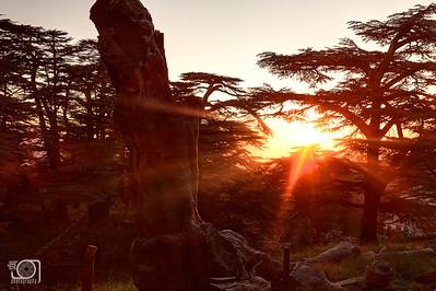 Cedar sunset