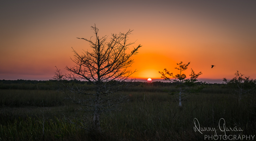 The end of Winter in the Everglades