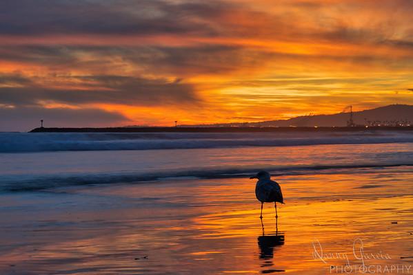 The Last Sea Gull