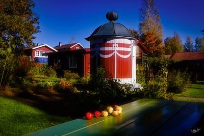 Apples in Carl Larsson's Garden, Sundborn