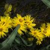 Water Flowers #1