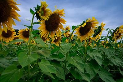 Donaldson Farms - Hackettstown, New Jersey