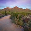 Sonoran Desert Preserve