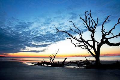 Driftwood Beach Sunrise # 2