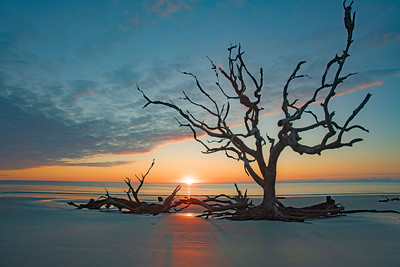 Driftwood Beach Sunrise # 5