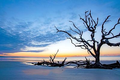 Driftwood Beach # 3